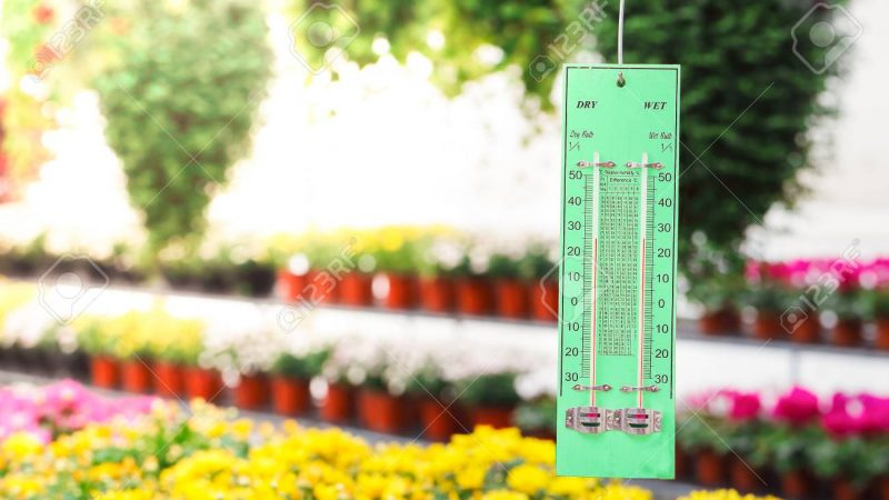 Thermometer in flower greenhouse