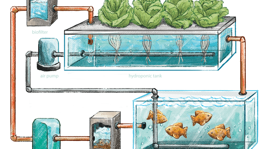 Closed-Aquaponics-V2-e1559154289927-min