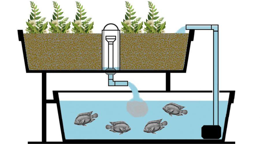 aquaponics-gardening-1