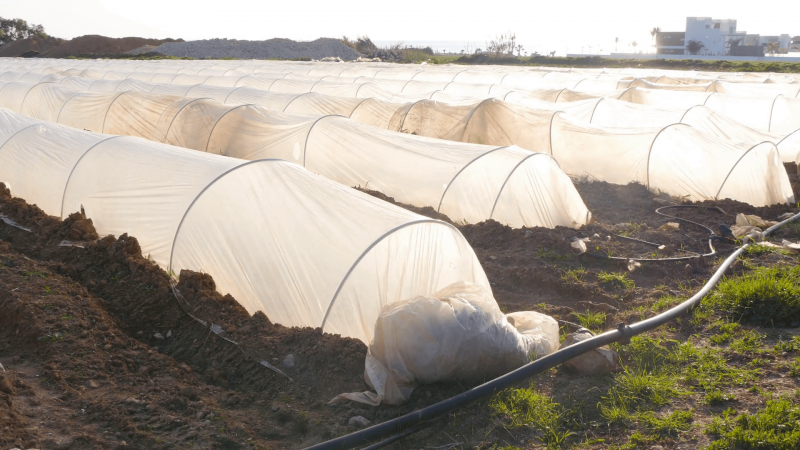 videoblocks-polythene-tunnel-as-a-plastic-greenhouse-in-an-allotment-with-growing-vegetables-at-sunset_r3eolggaig_thumbnail-full01-min